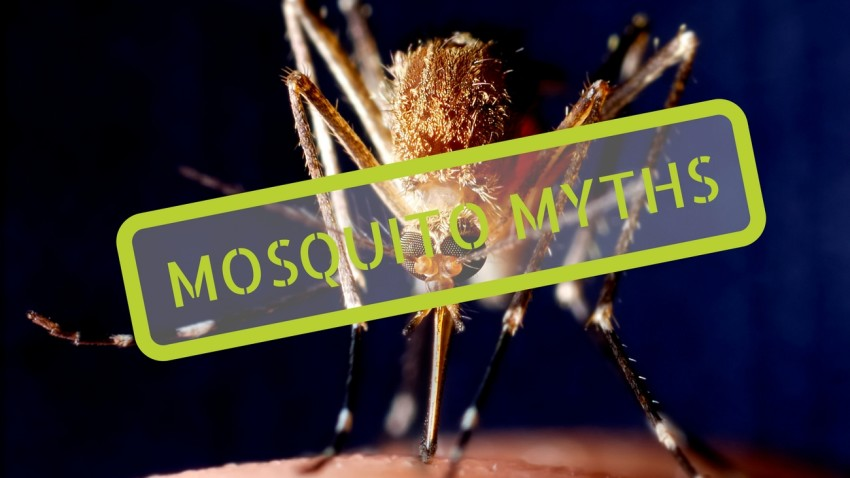 Citronella and Other Mosquito Myths