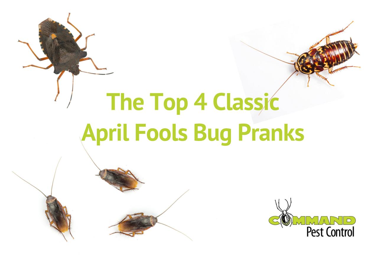 Command\'s Favorite April Fools Bug Pranks - Command Pest