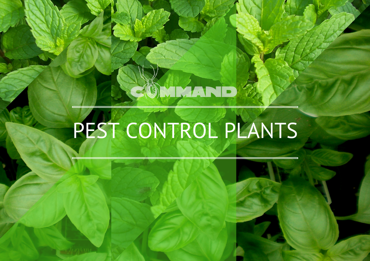 Command And These 5 Plants Equals A Pest Free Garden