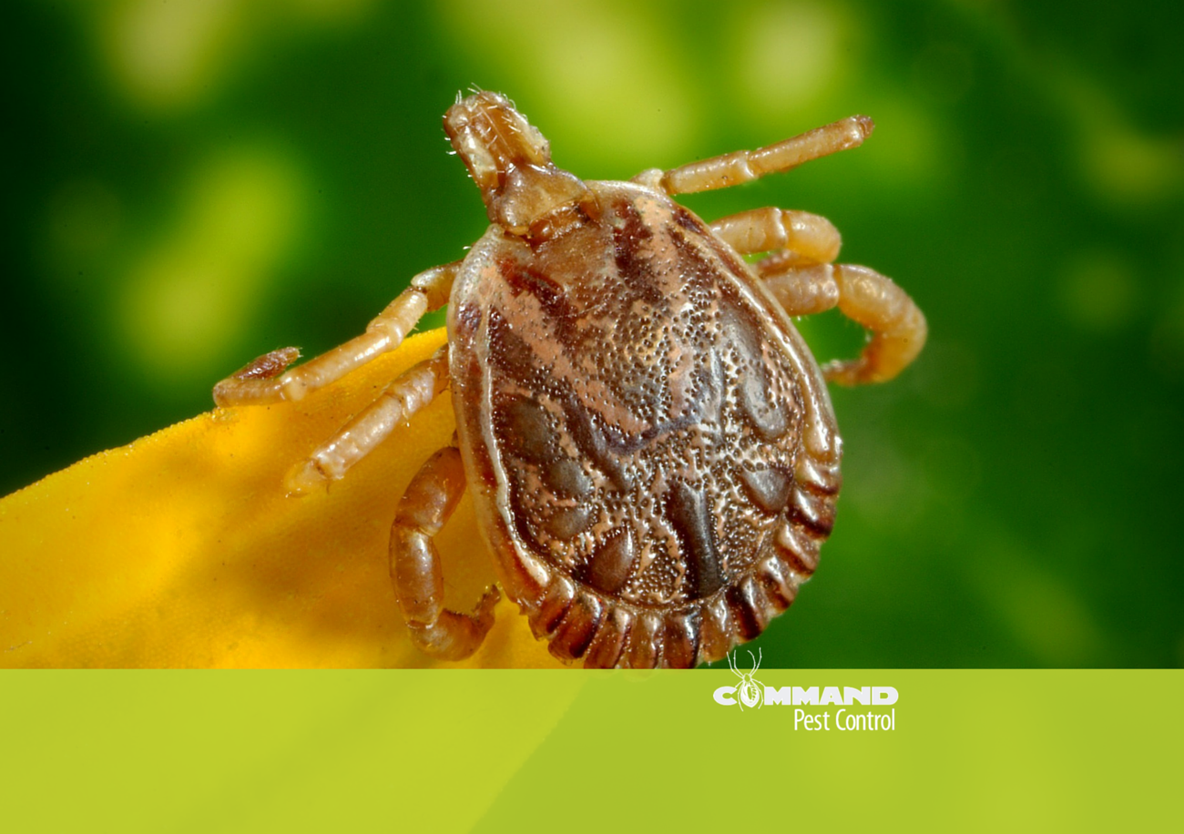 Arkansas Tick Prevention