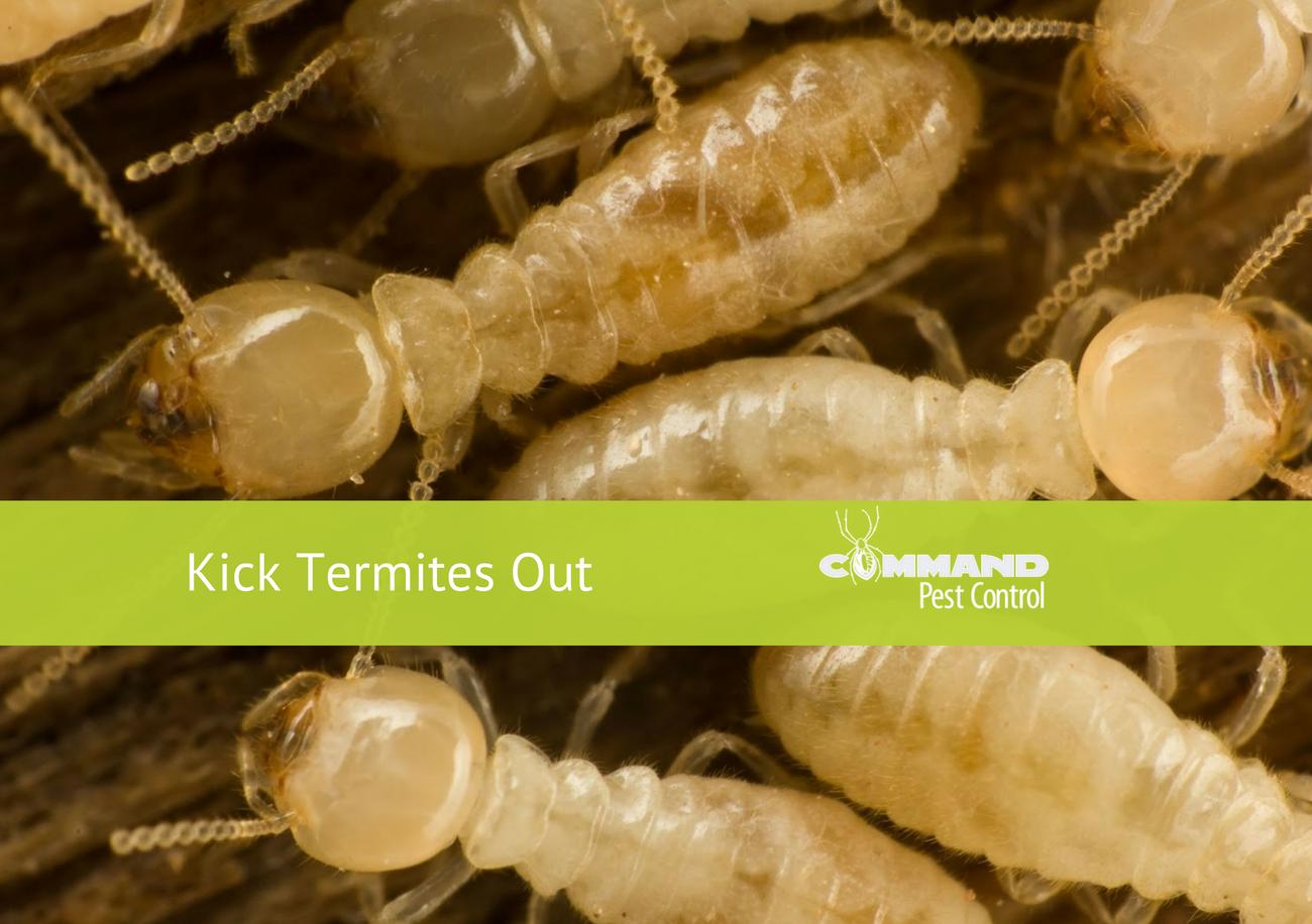 arkansas termites