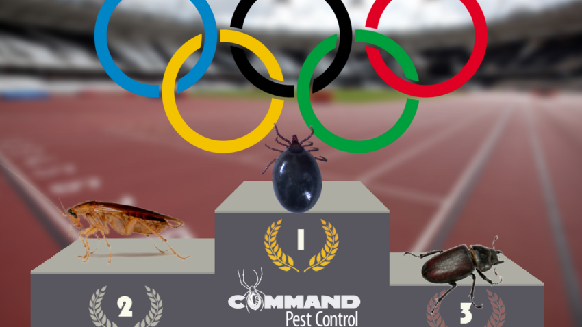 2016 olympic pest athletes little rock arkansas