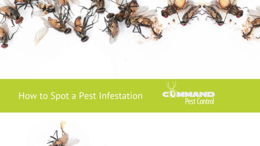 arkansas pest infestation