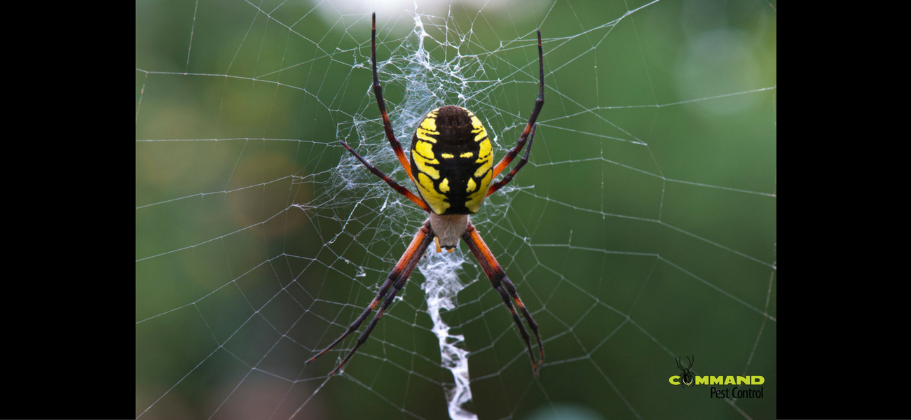 garden spider pest control little rock