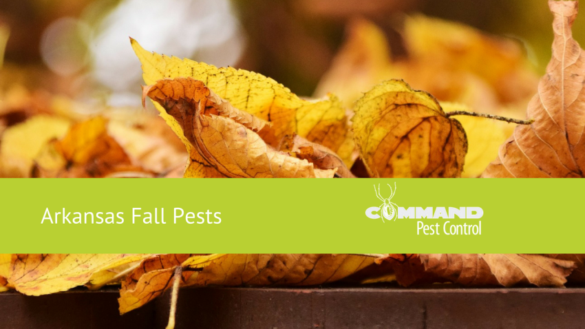 Arkansas Fall Pests