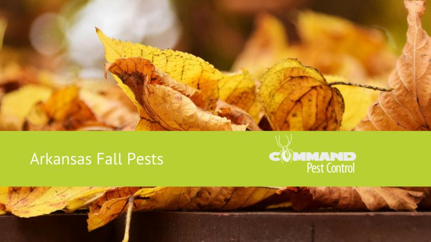 Arkansas Fall Pests