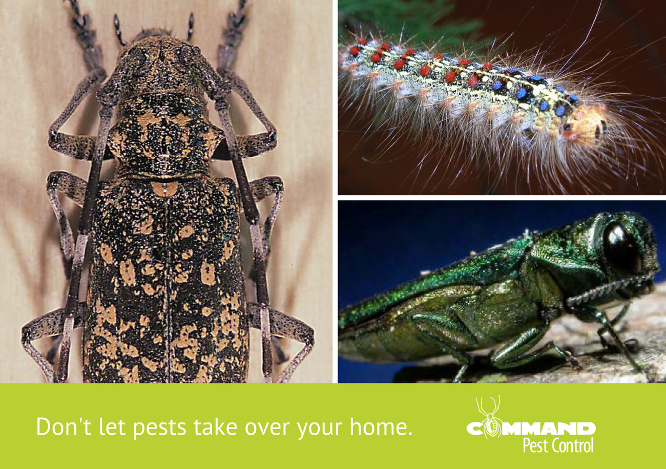 Protect Your Property from Invasive Species in Arkansas