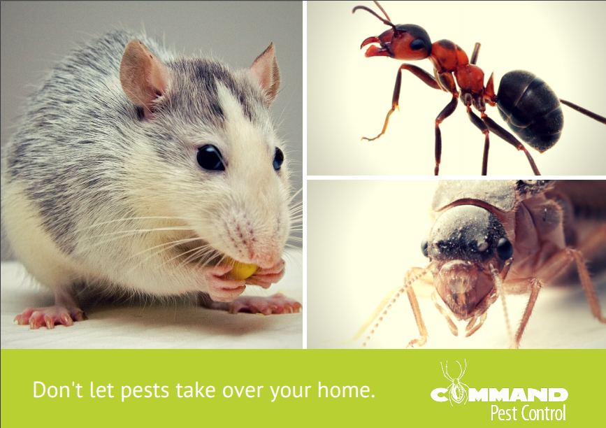 Prevent Unwanted Pests This Spring