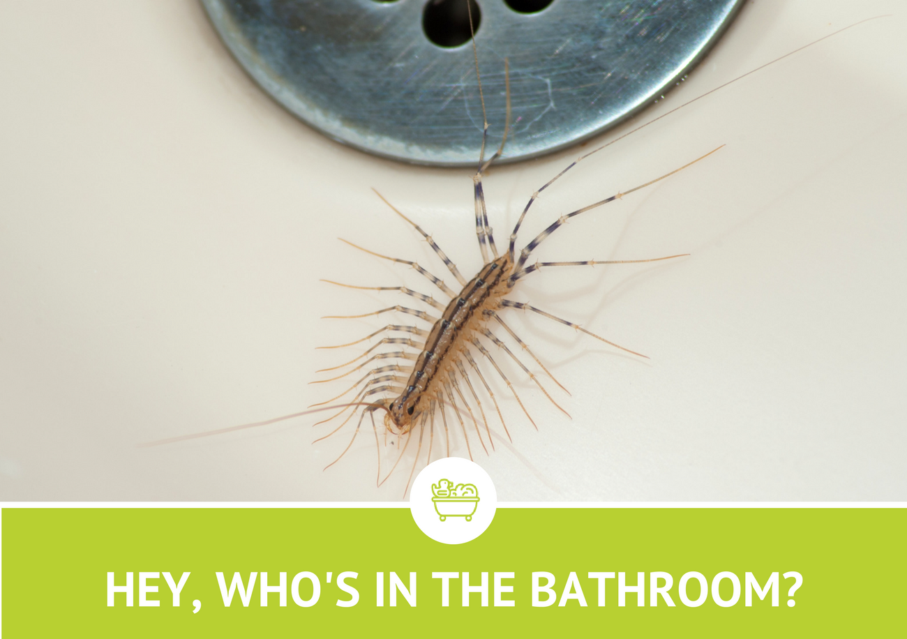 5 Water-Loving Pests Living in Your Bathroom - Command Pest