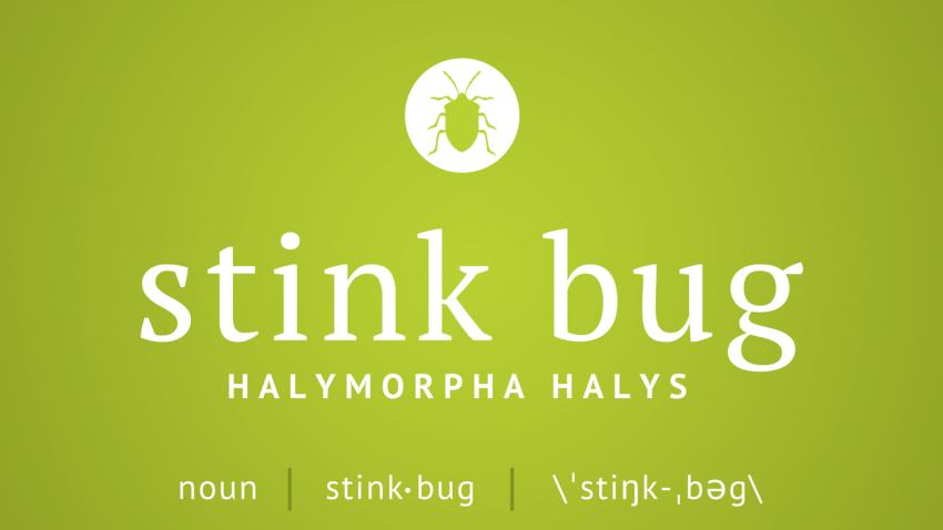 Command's Pest Profile: Stink Bugs