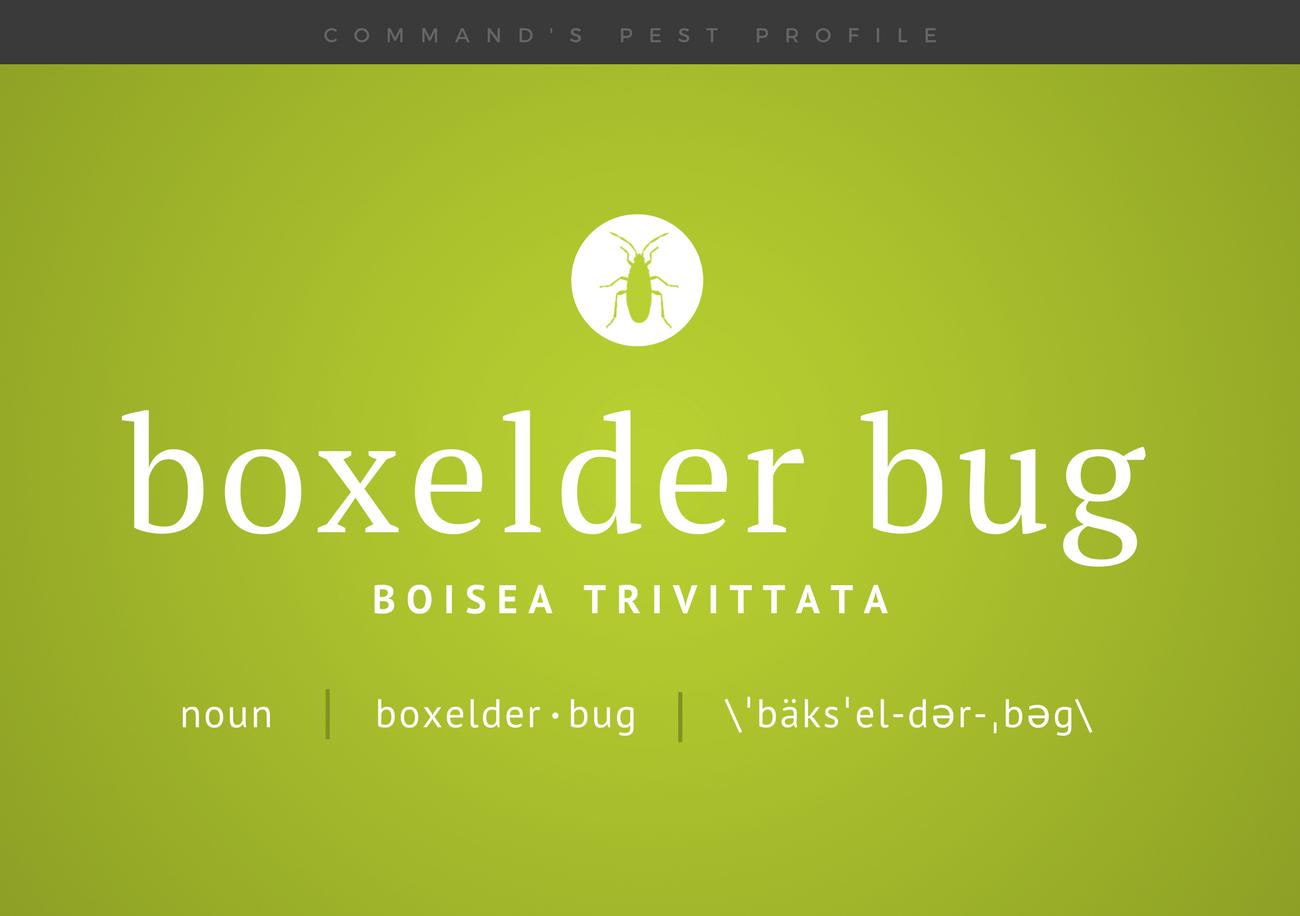 Pest Profile: Boxelder Bug