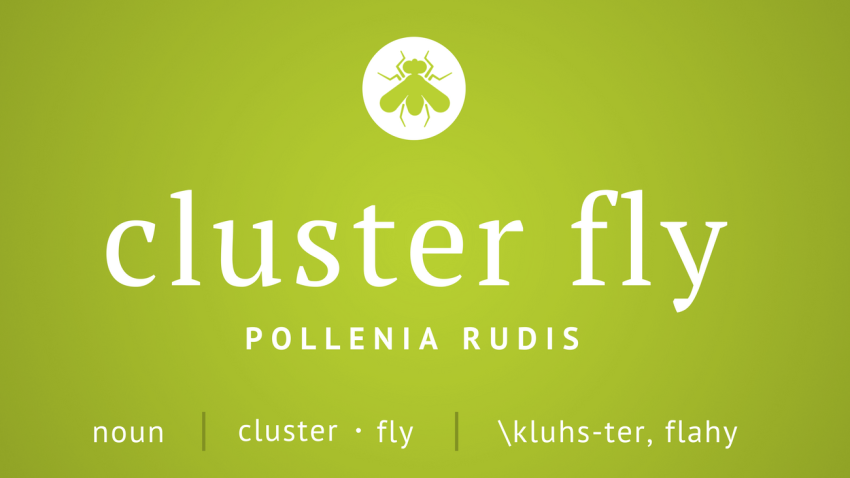 Command's Pest Profile: Cluster Fly