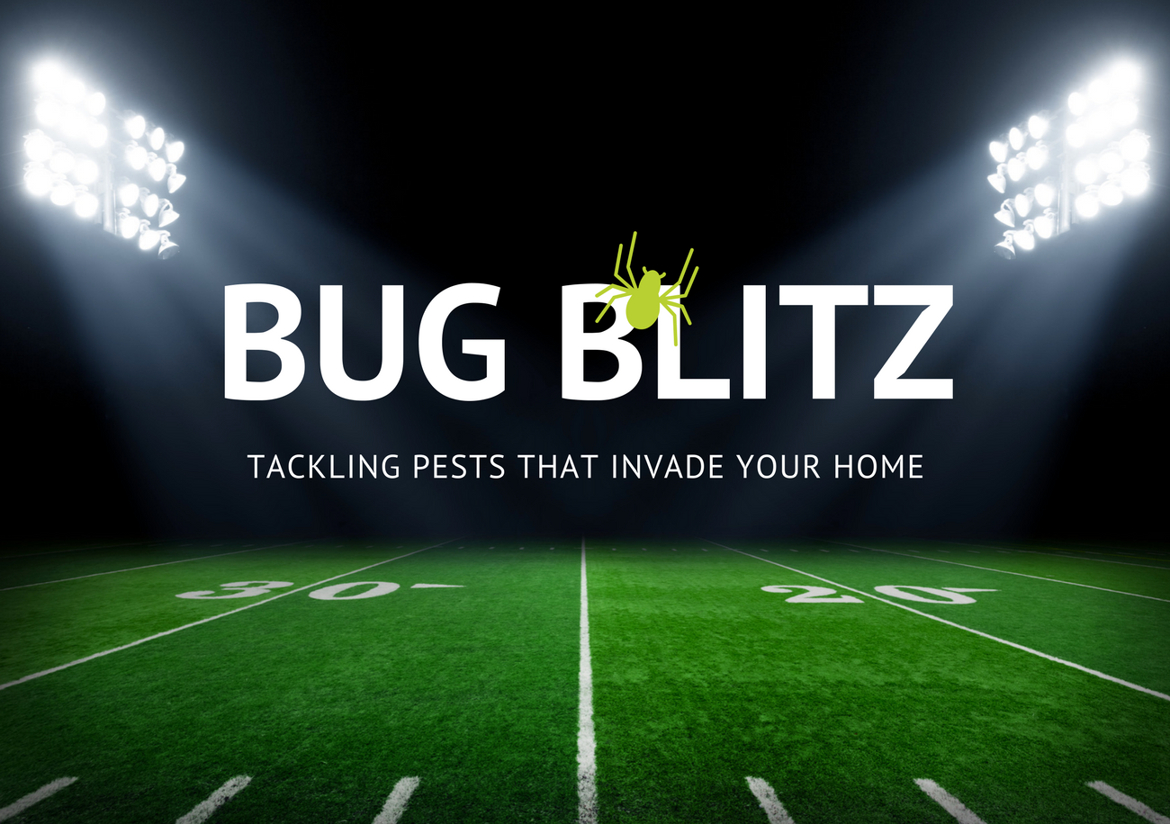 Bug Blitz: Pests That Invade Your Home