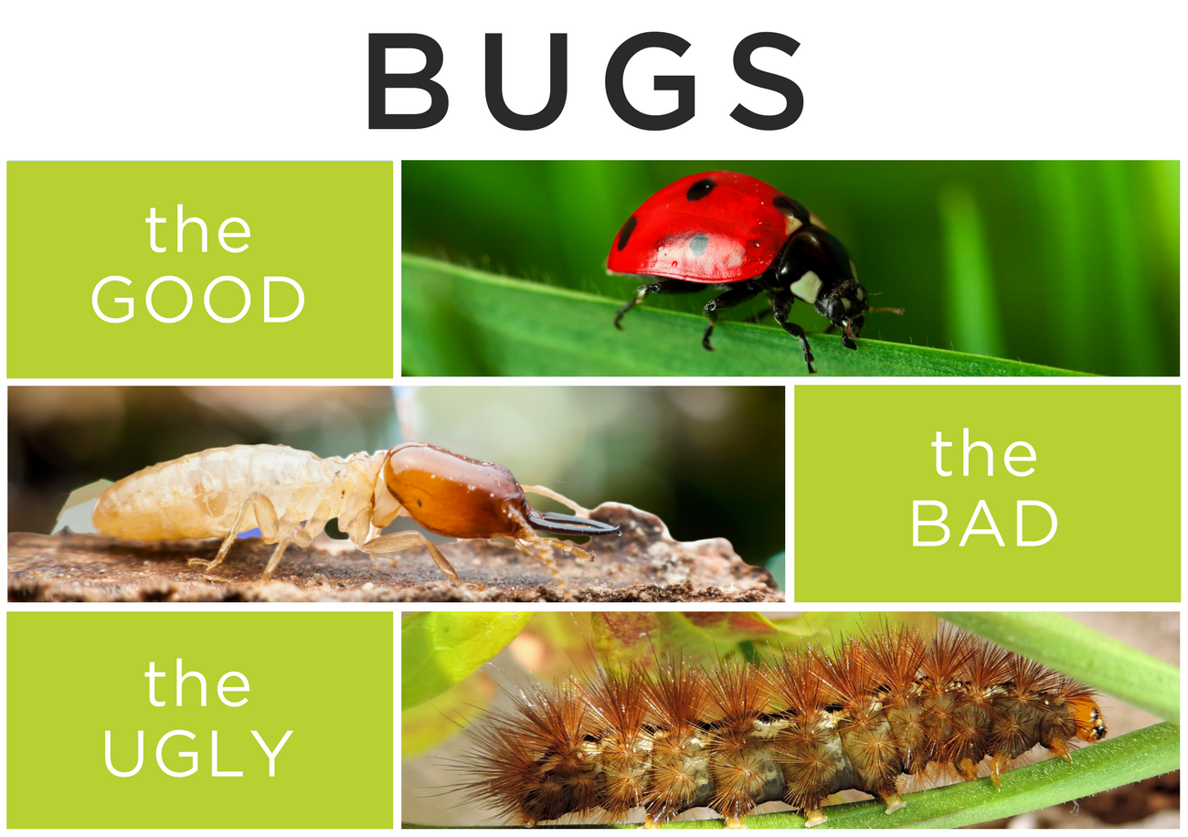 Bugs: The Good, The Bad, The Ugly