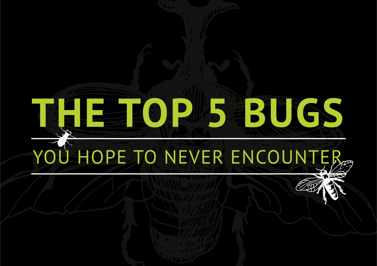 Top 5 Insects You Hope to Never Encounter