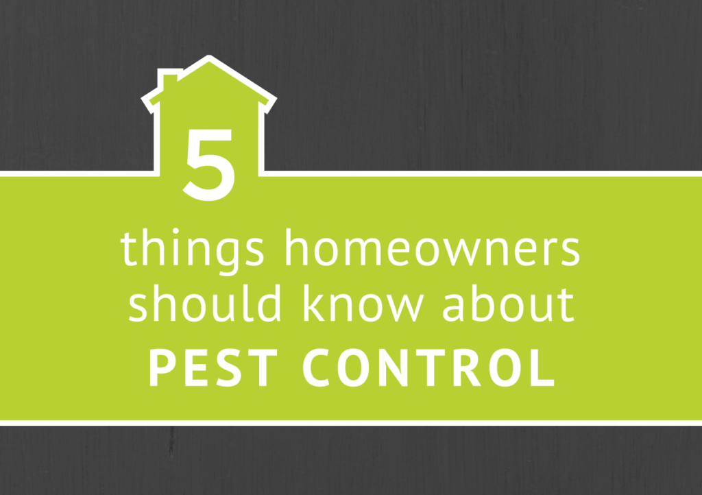 5 Things Homeowners Should Know About Pest Control | Command Pest