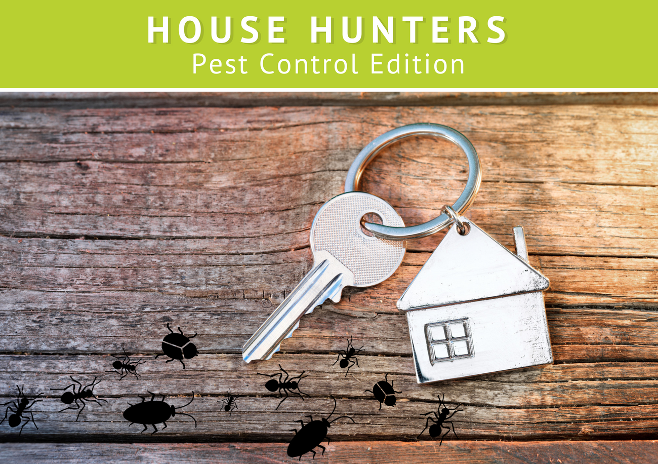 House Hunters: Pest Control Edition | Command Pest Control