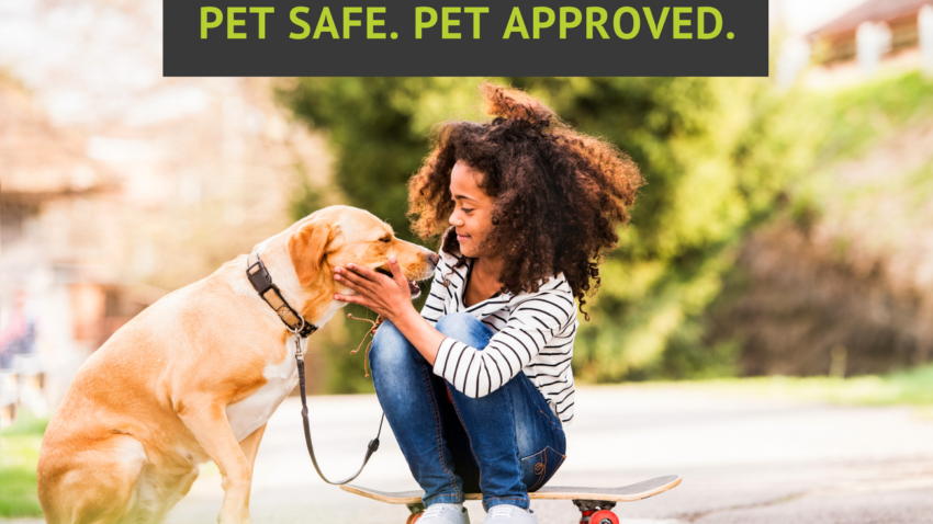 Pest-Free Treatments Should Also Be Pet Friendly | Command Pest Control