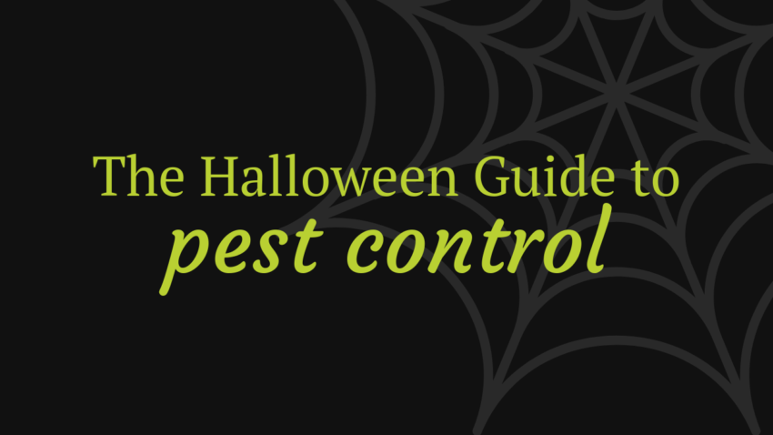 Halloween Guide to Pest Control | Command Pest Control
