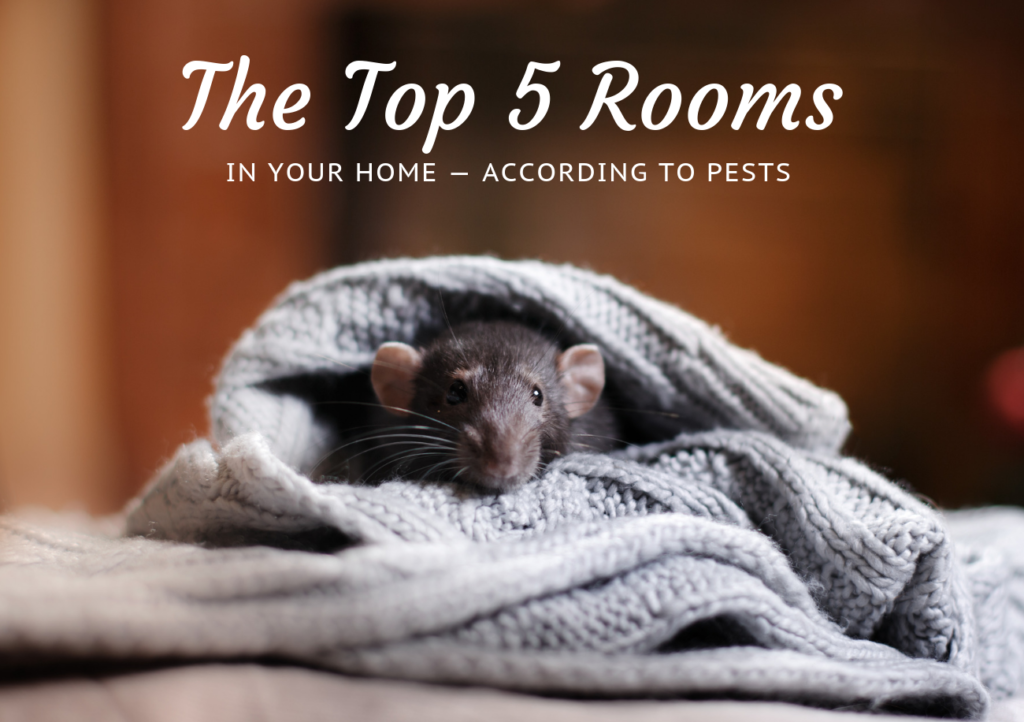 Your Home's Top 5 Rooms- According to Pest | Command Pest Control