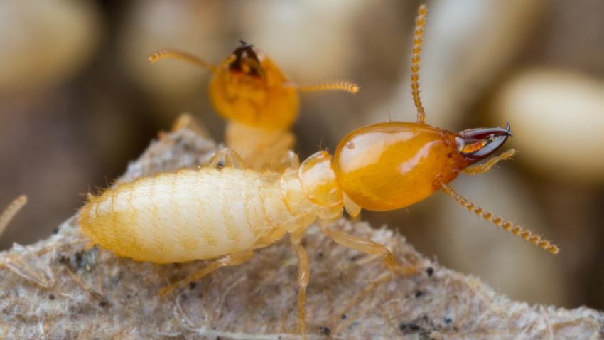 Summer is when Termite Activity Heats Up.